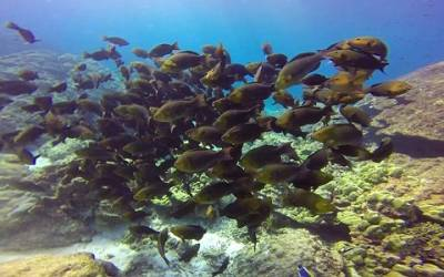 b2ap3_thumbnail_Thailand-dive-Donald-Duck-Bay.jpg
