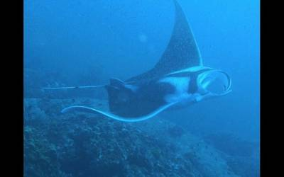 b2ap3_thumbnail_Thailand-dive-The-Dome-Manta.jpg