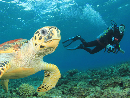 Thailand Dive Sites 11